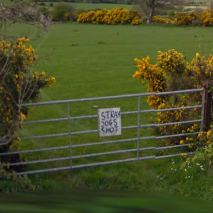 The downsides of Irish countryside living