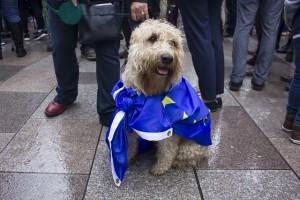 brexit dog